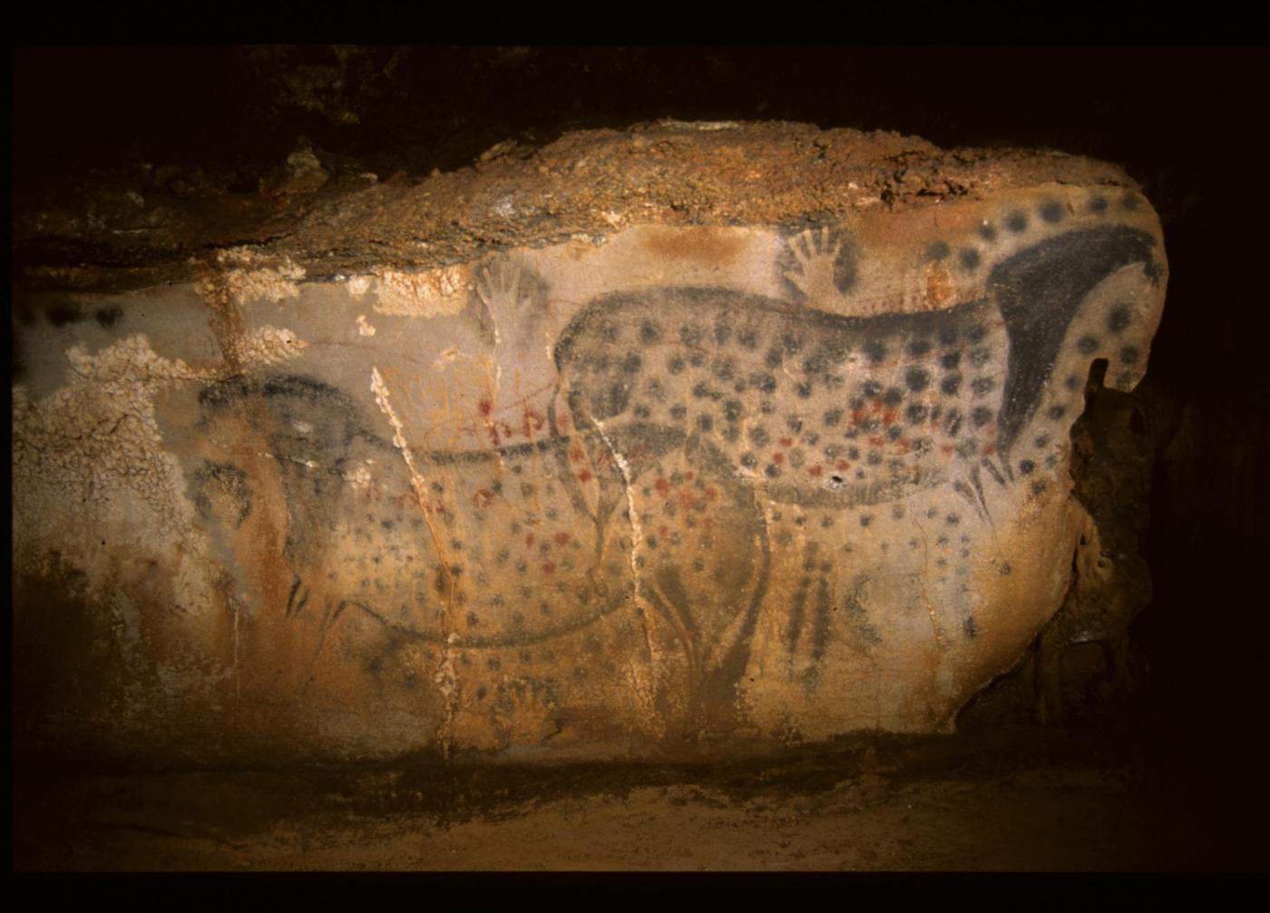 Cavalli a pois, dipinti realistici nelle grotte del paleolitico