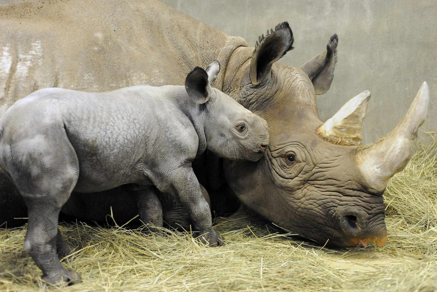Il 25% dei mammiferi rischia l'estinzione