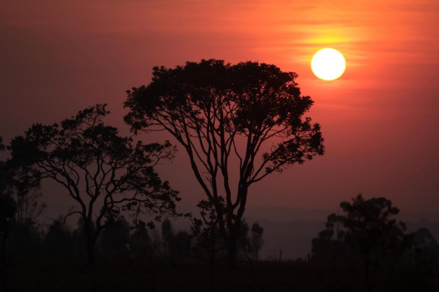 Foresta amazzonica, dove un popolo vive in fuga dai taglialegna