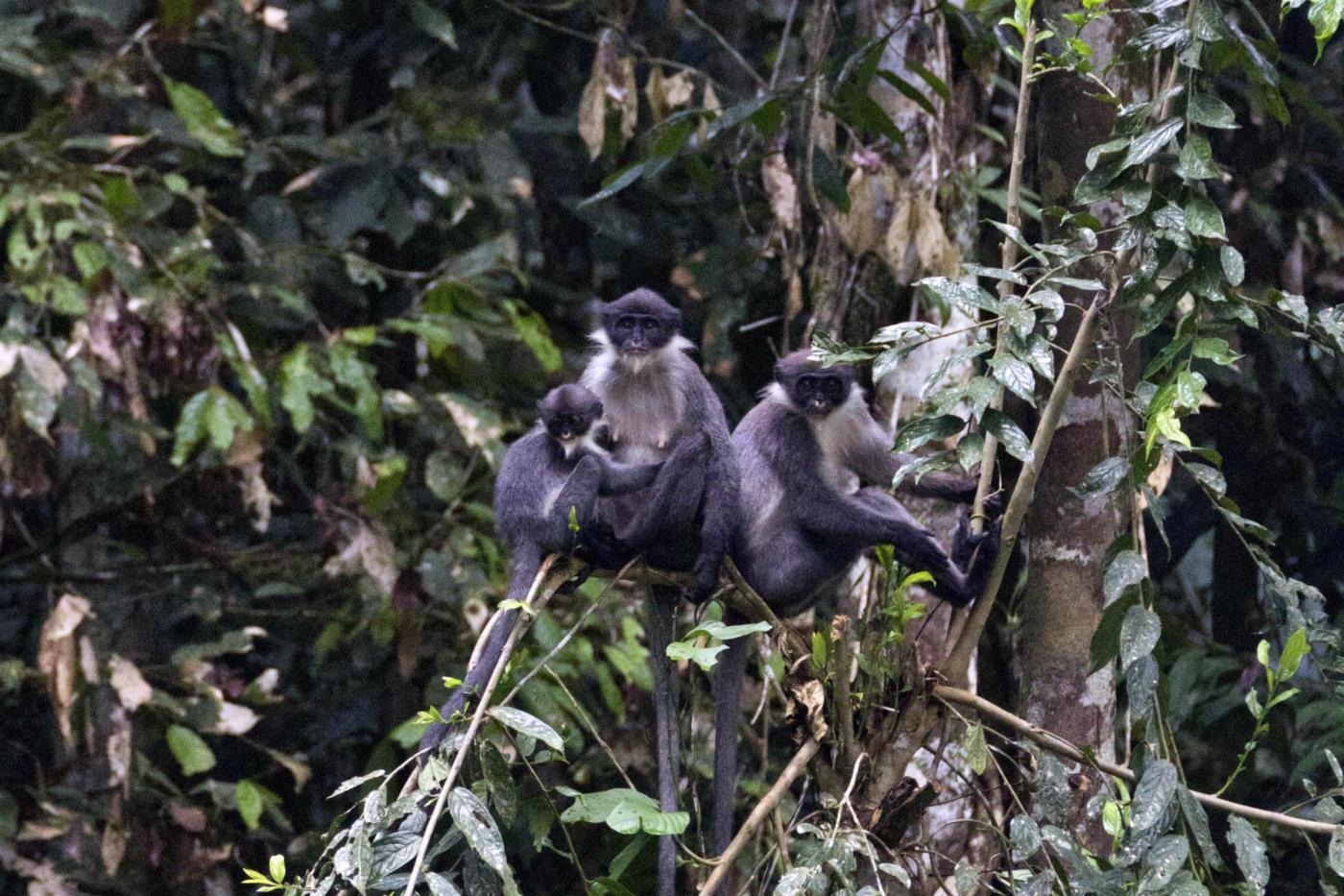 La scimmia perduta e ritrovata