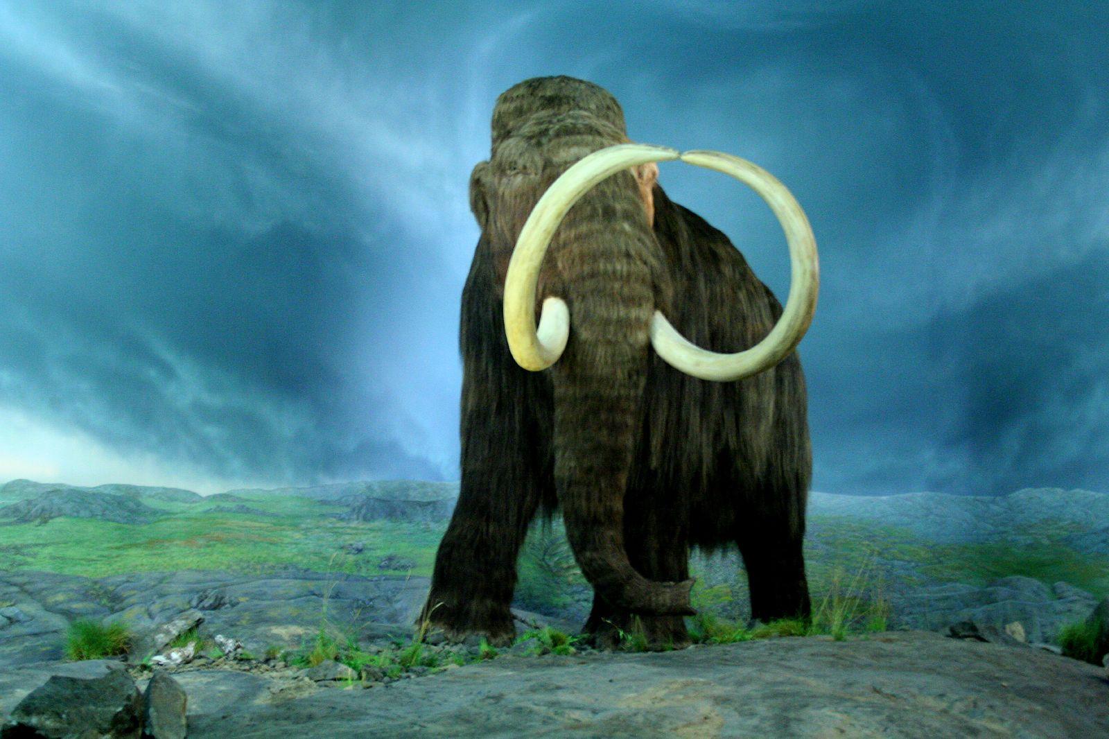"""""""Cloneremo i mammut"""": l'annuncio di scienziati russi e sud-coreani"""