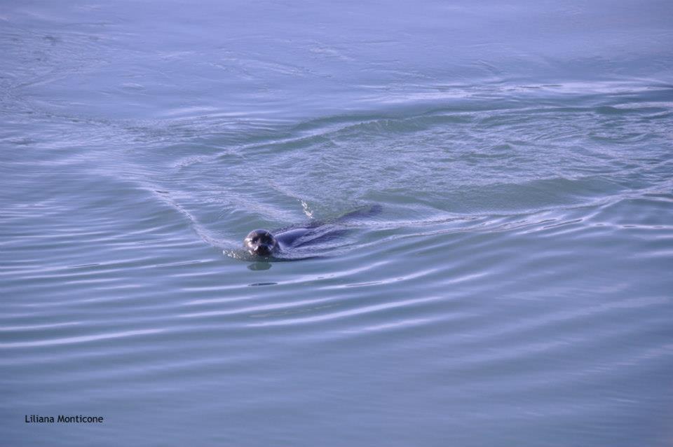Visitare Jokursarlon iceberg nella laguna più bella d'Islanda foche
