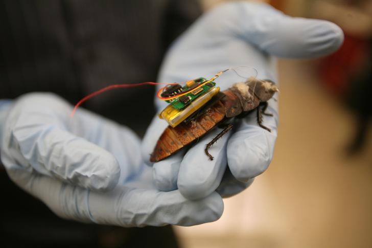 Arriva lo scarafaggio 2.0: grazie ad un microcomputer sarà in grado di salvare vite umane