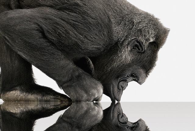 Gorilla Glass 4, Corning svela la nuova generazione di schermi indistruttibili