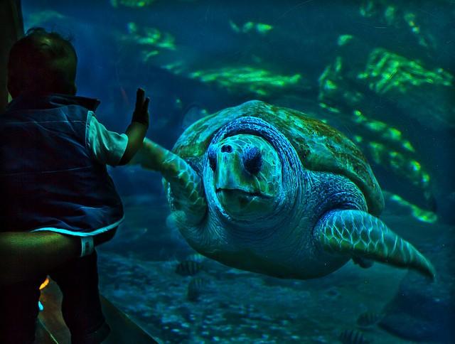 Gli acquari pi grandi del mondo alla scoperta dei pesci for Vasche per tartarughe marine