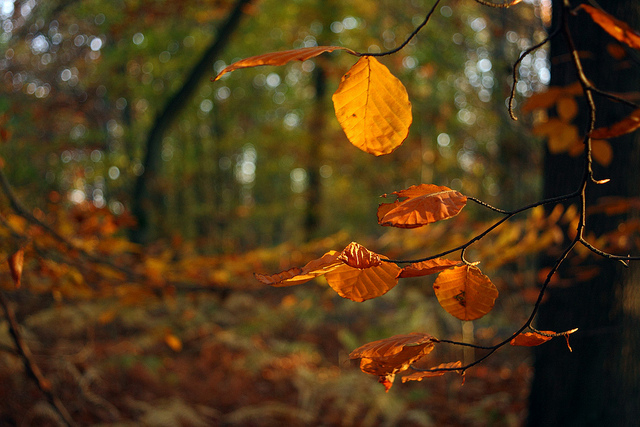 I colori dell autunno nelle foto dei boschi dal mondo for Case moderne nei boschi