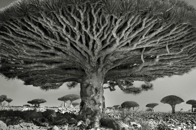 Alberi secolari: ecco gli alberi più vecchi del mondo immortalati da Beth Luna