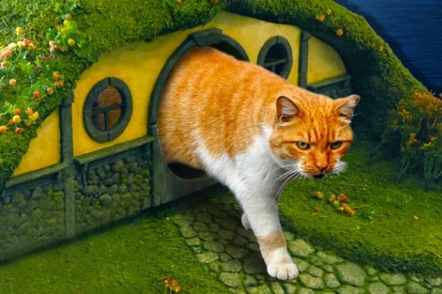 Il Signore degli Anelli per animali domestici: accessori solo per gatti colti