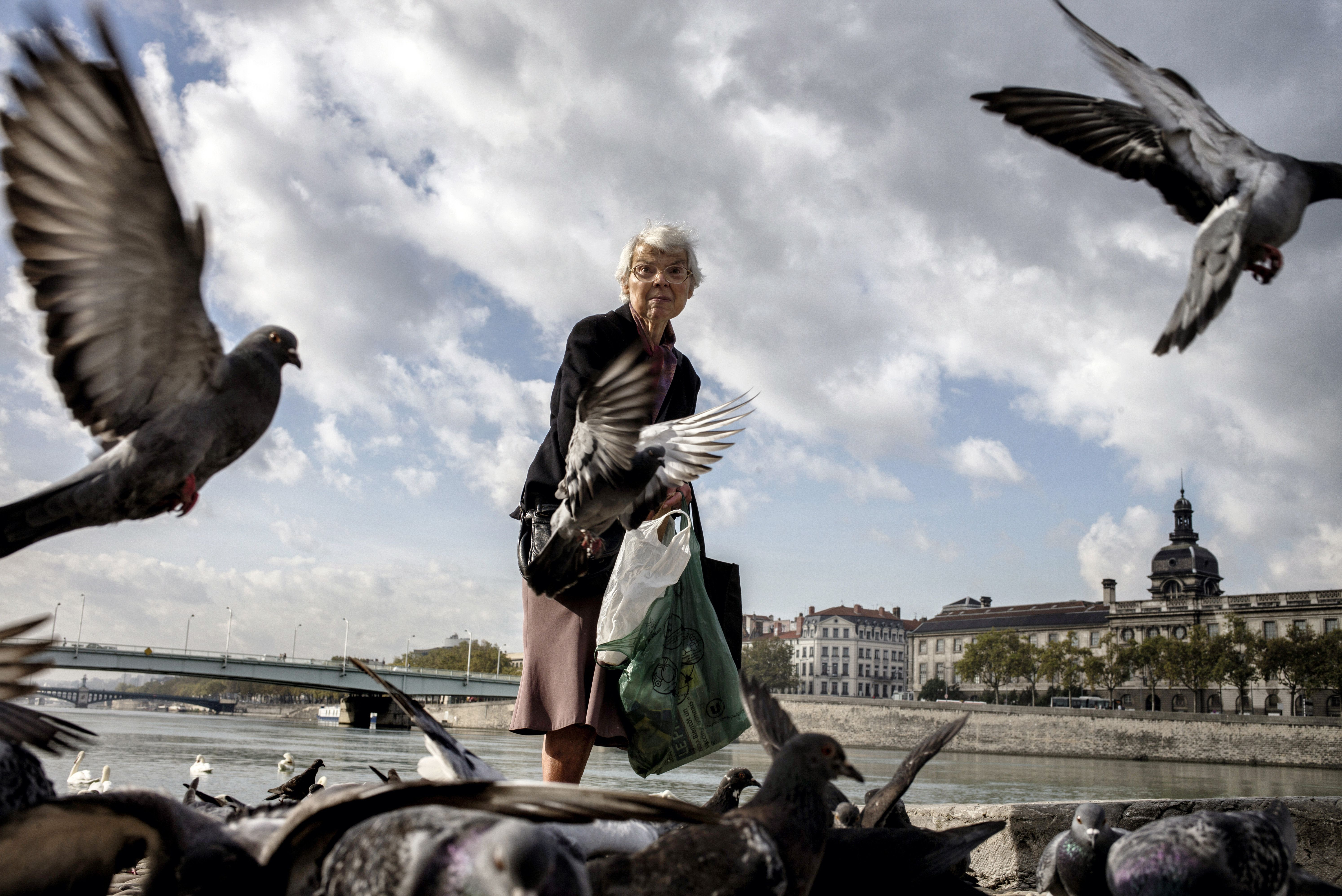 Tutti i rimedi casalinghi per allontanare i piccioni