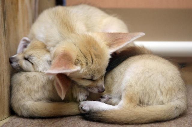5 animali che non dovrebbero essere considerati domestici