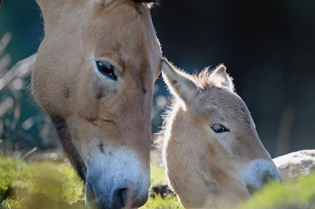Curare i bambini autistici come si curano i cavalli affetti da maladattamento