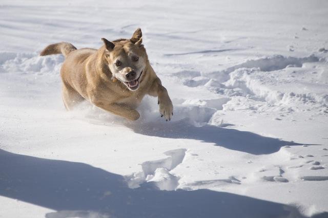 Cani e gatti, come difenderli dal freddo
