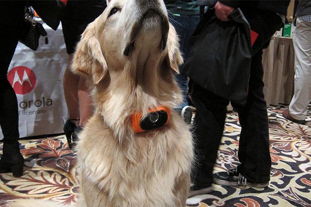 Motorola Scout 5000, il collare smart per animali presentato al CES 2015